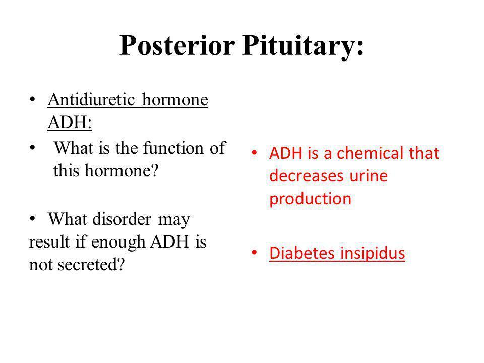 Posterior Pituitary: Antidiuretic hormone ADH: