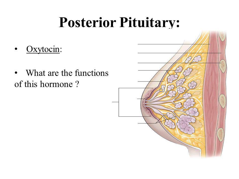 Posterior Pituitary: Oxytocin: