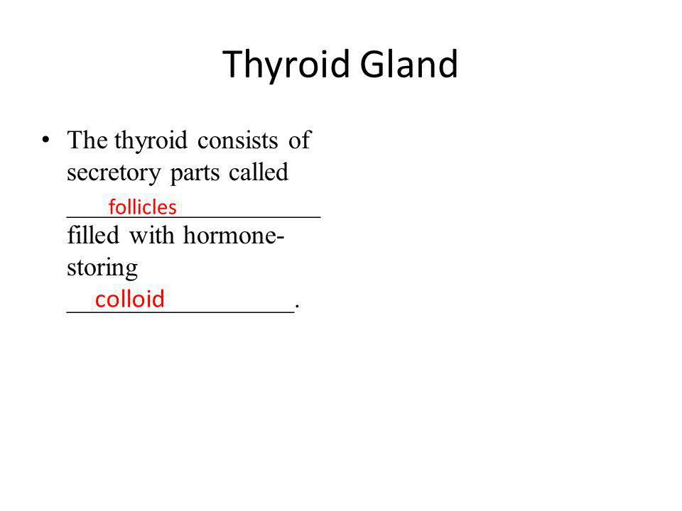 Thyroid Gland The thyroid consists of secretory parts called ___________________ filled with hormone-storing _________________.
