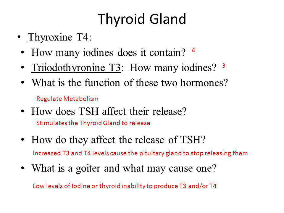 Thyroid Gland Thyroxine T4: How many iodines does it contain