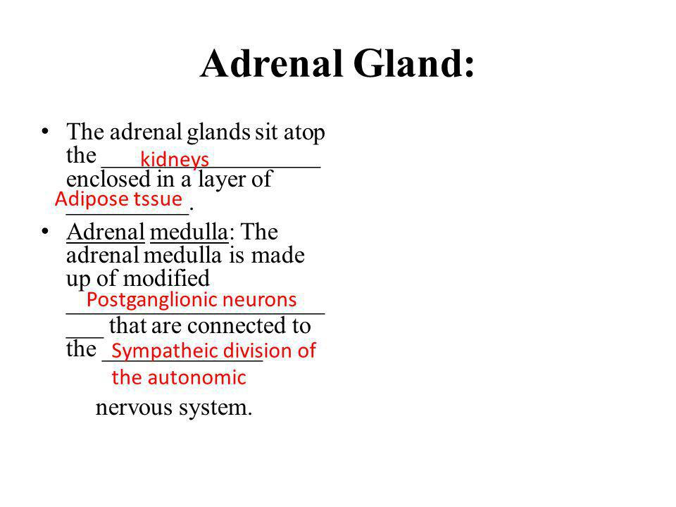Adrenal Gland: The adrenal glands sit atop the __________________ enclosed in a layer of __________.