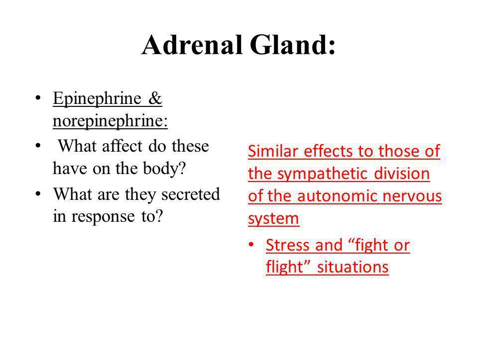 Adrenal Gland: Epinephrine & norepinephrine: