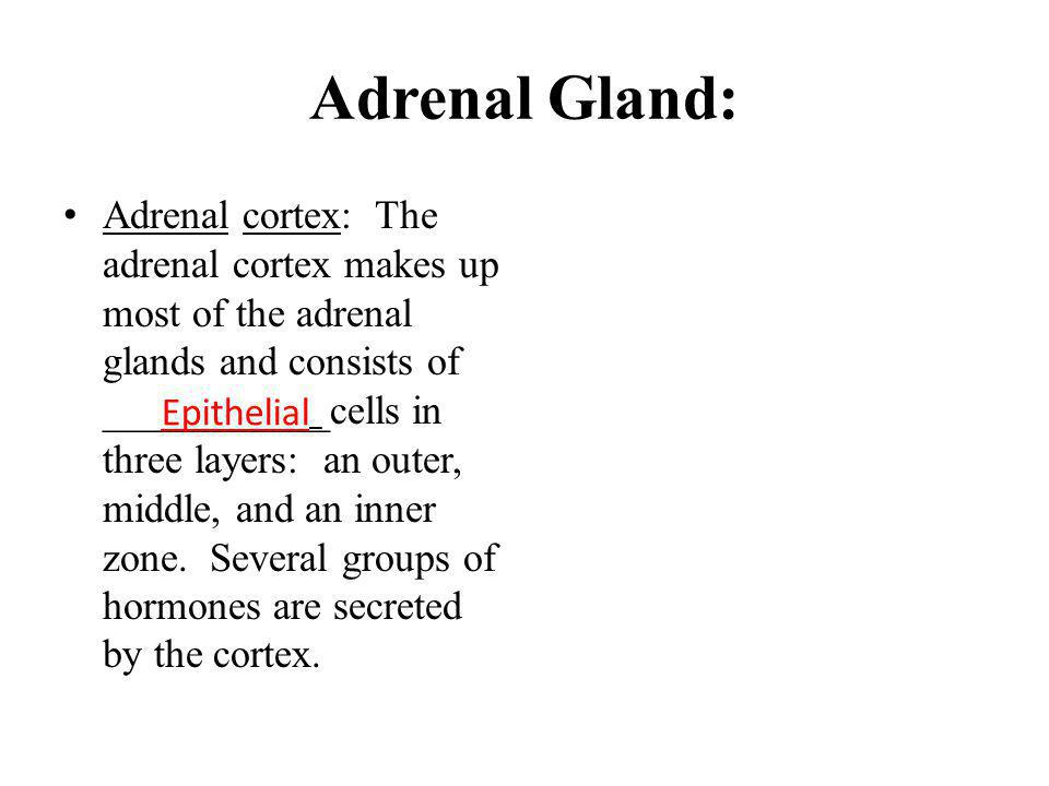 Adrenal Gland: