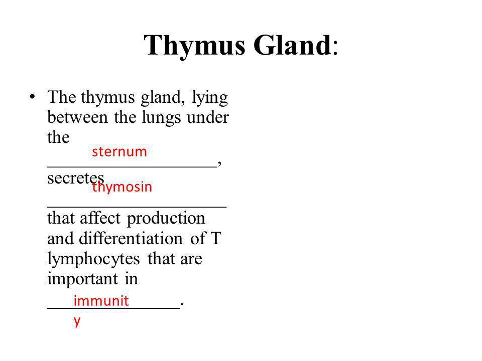 Thymus Gland:
