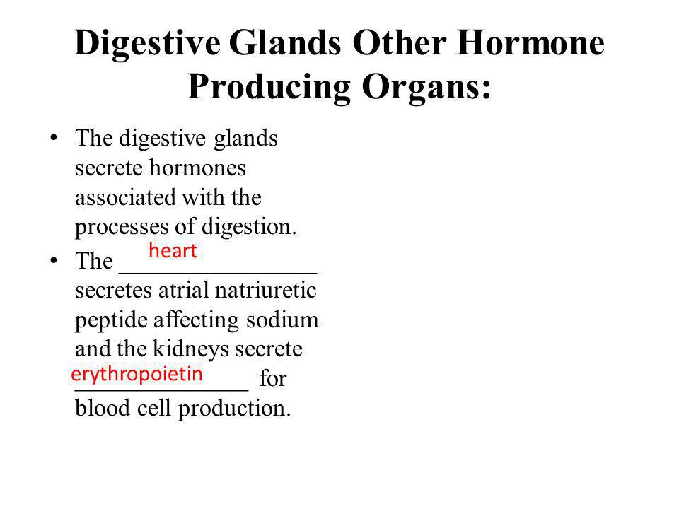 Digestive Glands Other Hormone Producing Organs: