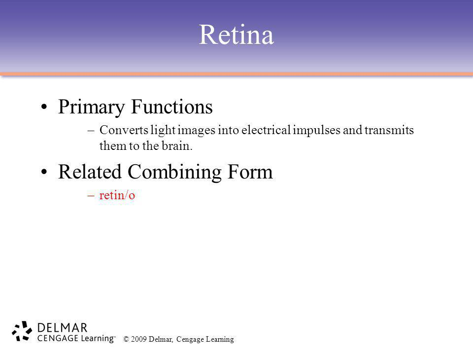 Retina Primary Functions Related Combining Form