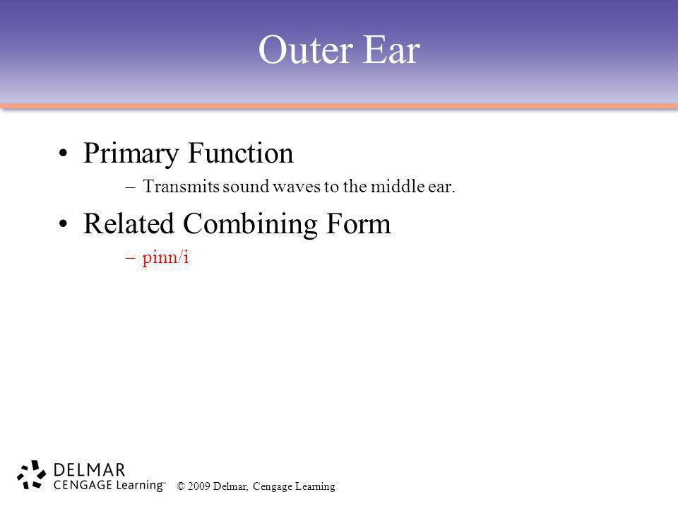 Outer Ear Primary Function Related Combining Form