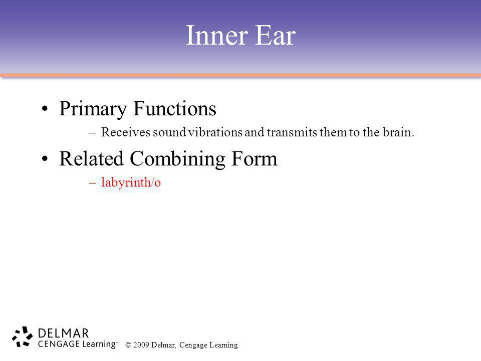 Inner Ear Primary Functions Related Combining Form