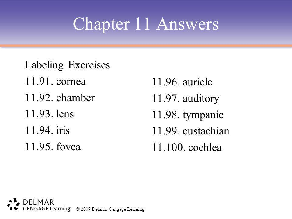 Chapter 11 Answers Labeling Exercises 11.91. cornea 11.92. chamber