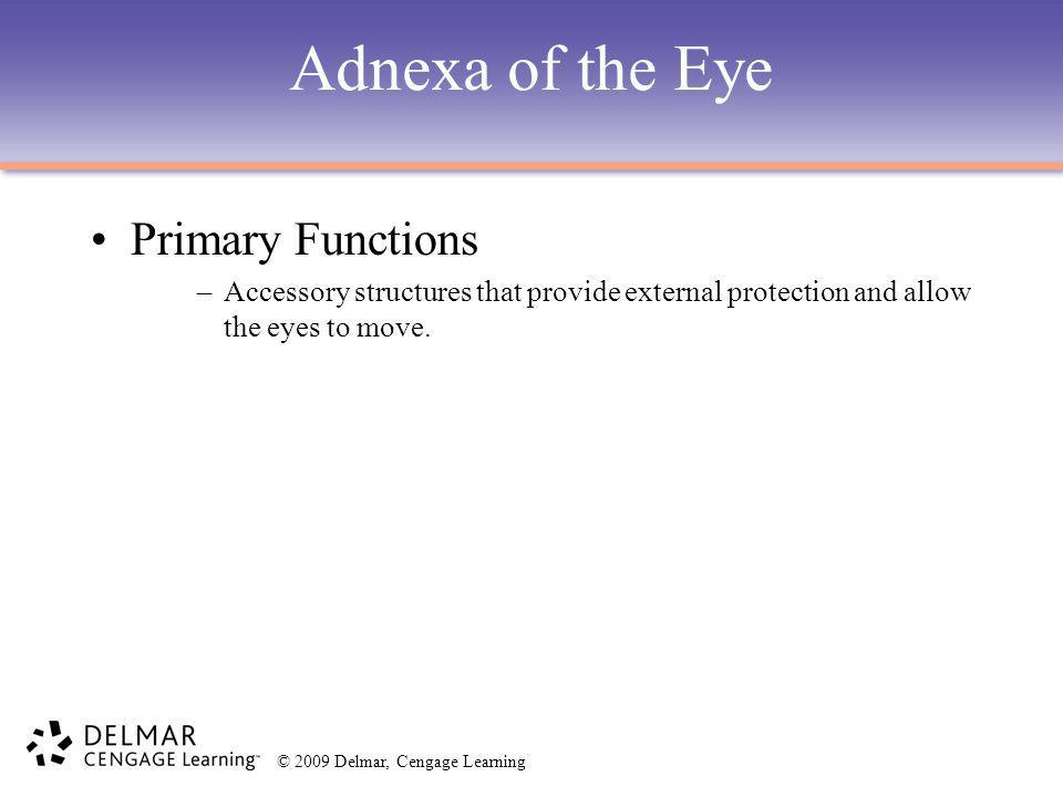 Adnexa of the Eye Primary Functions