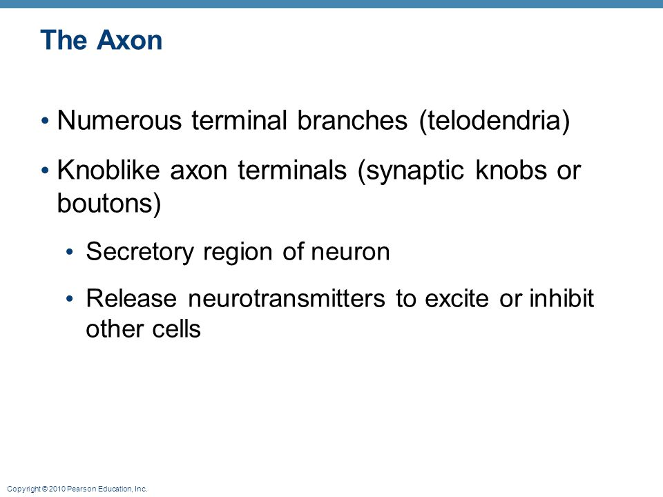 Numerous terminal branches (telodendria)