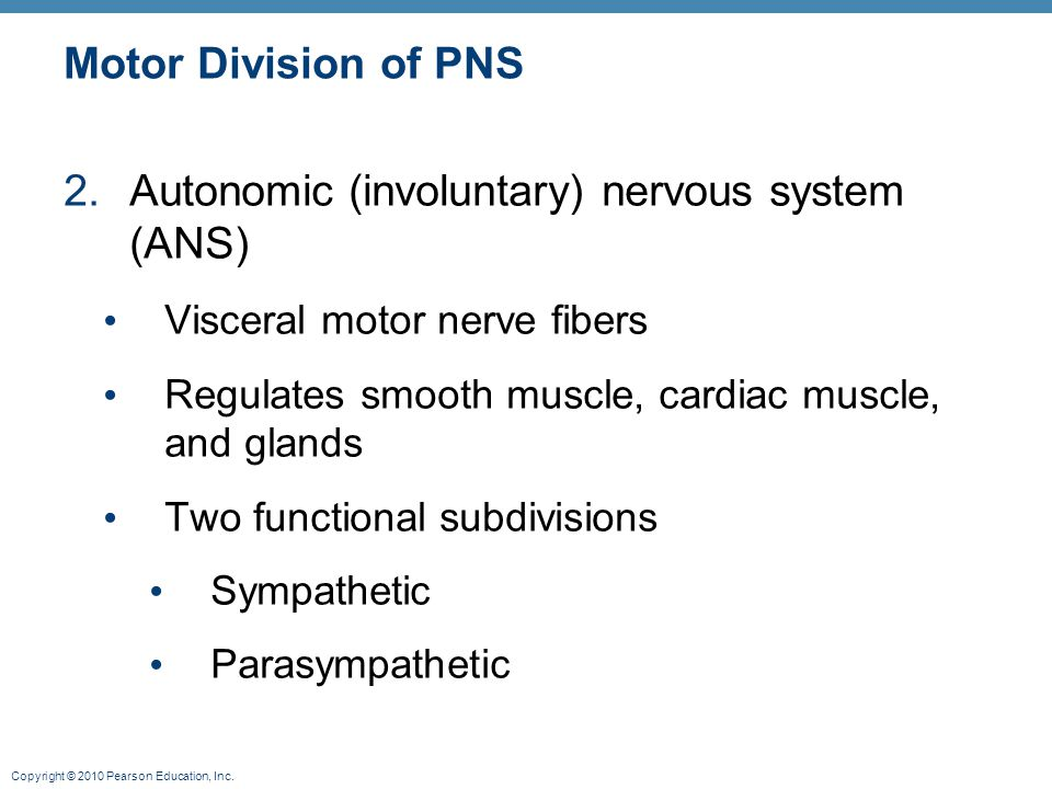 Autonomic (involuntary) nervous system (ANS)