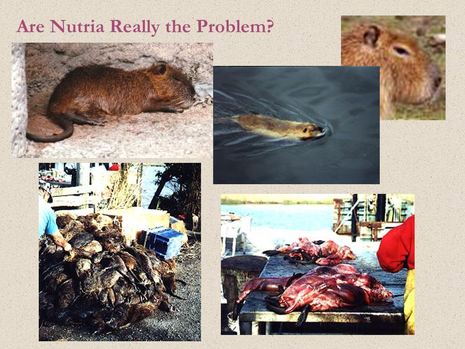 Are Nutria Really the Problem