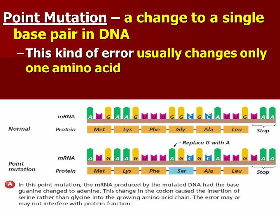 Point Mutation – a change to a single base pair in DNA