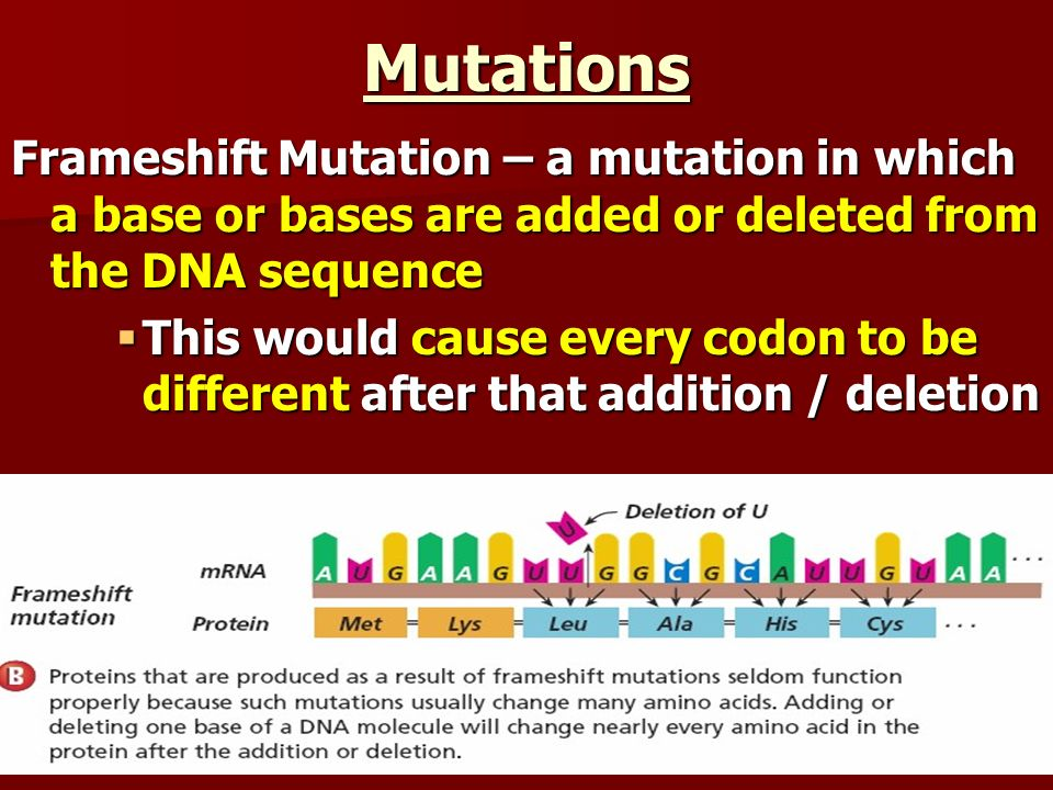Mutations Frameshift Mutation – a mutation in which a base or bases are added or deleted from the DNA sequence.