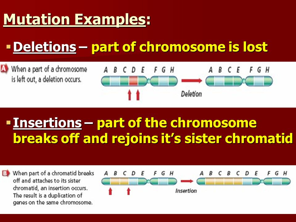 Mutation Examples: Deletions – part of chromosome is lost