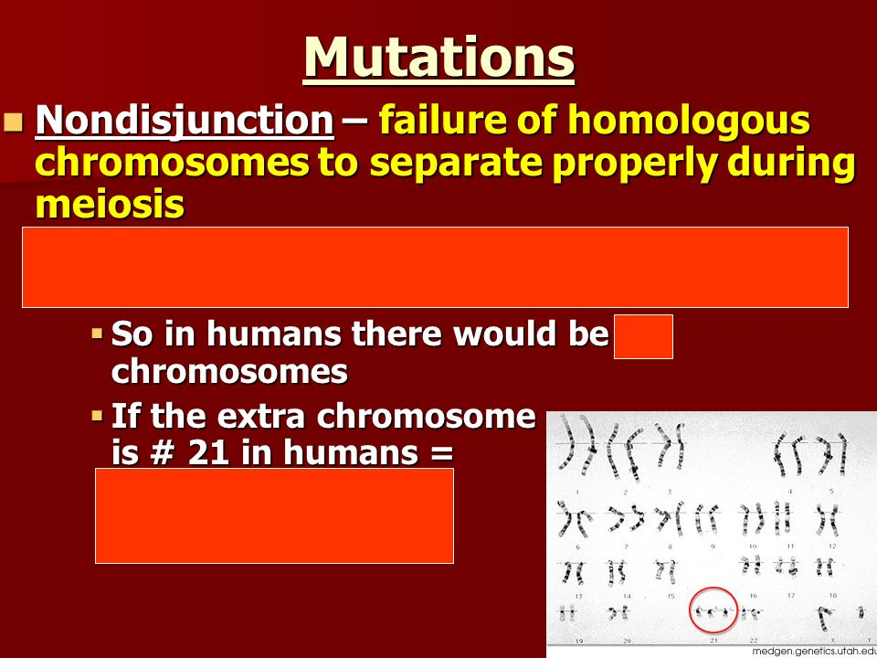 Mutations Nondisjunction – failure of homologous chromosomes to separate properly during meiosis.