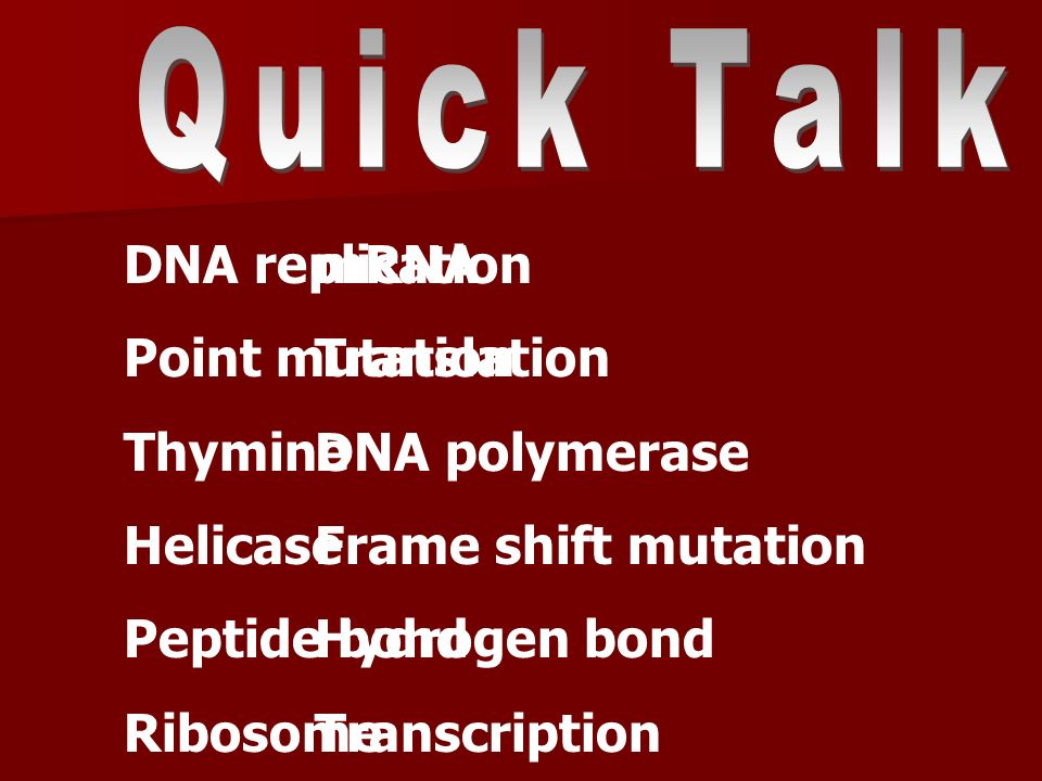 Quick Talk DNA replication. Point mutation. Thymine. Helicase. Peptide bond. Ribosome. mRNA. Translation.