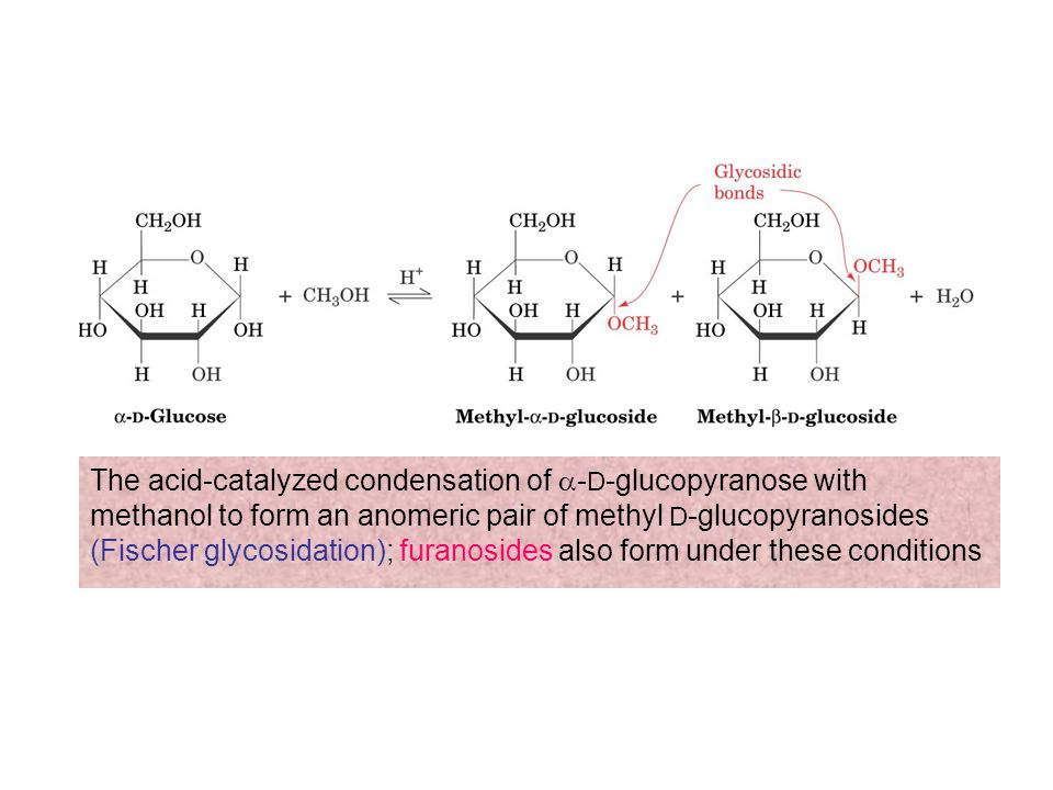 The acid-catalyzed condensation of a-D-glucopyranose with methanol to form an anomeric pair of methyl D-glucopyranosides (Fischer glycosidation); furanosides also form under these conditions