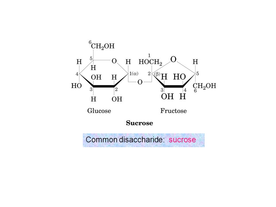 Common disaccharide: sucrose