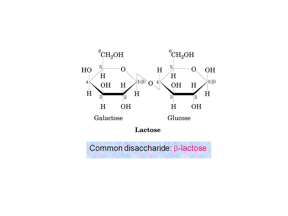 Common disaccharide: b-lactose