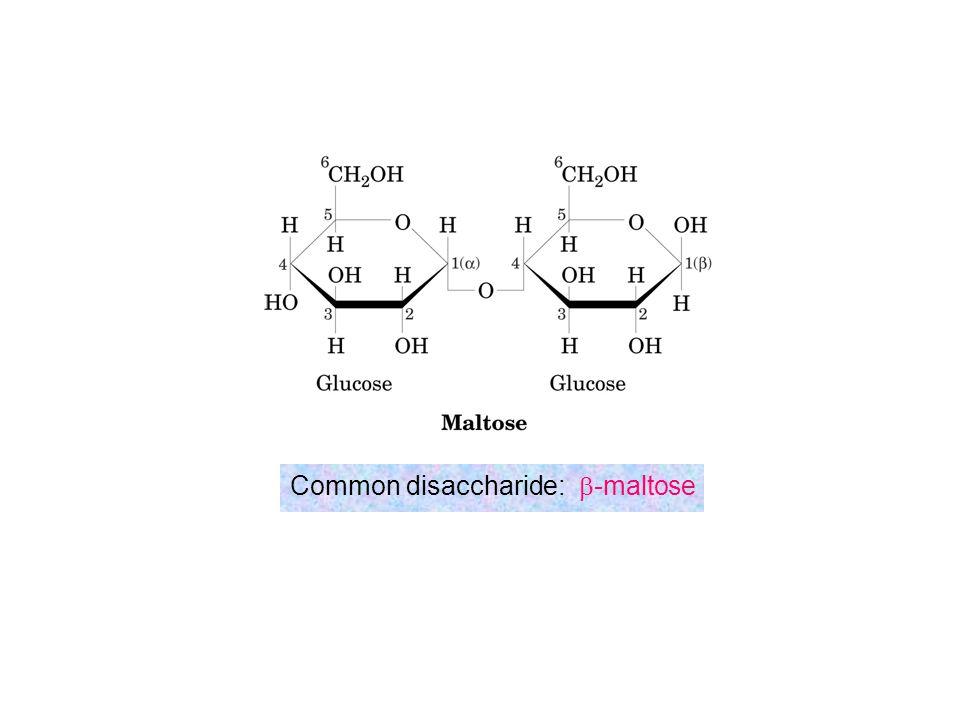 Common disaccharide: b-maltose