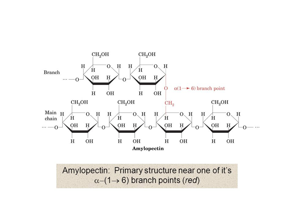 Amylopectin: Primary structure near one of it's a-(1® 6) branch points (red)