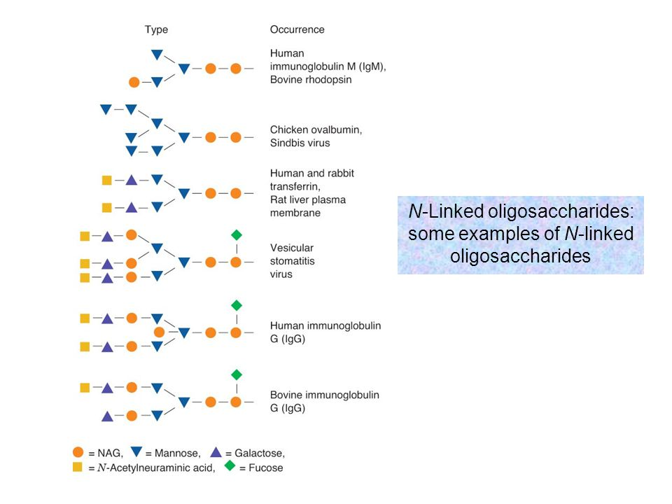 N-Linked oligosaccharides: some examples of N-linked oligosaccharides