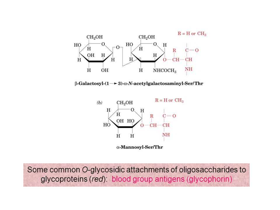 Some common O-glycosidic attachments of oligosaccharides to glycoproteins (red): blood group antigens (glycophorin)