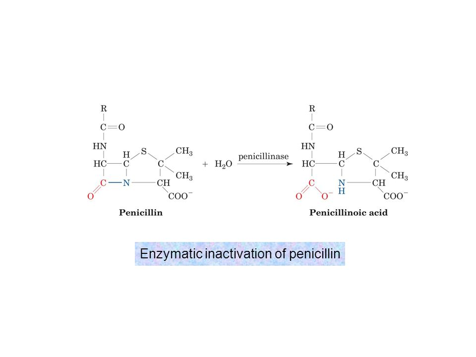 Enzymatic inactivation of penicillin