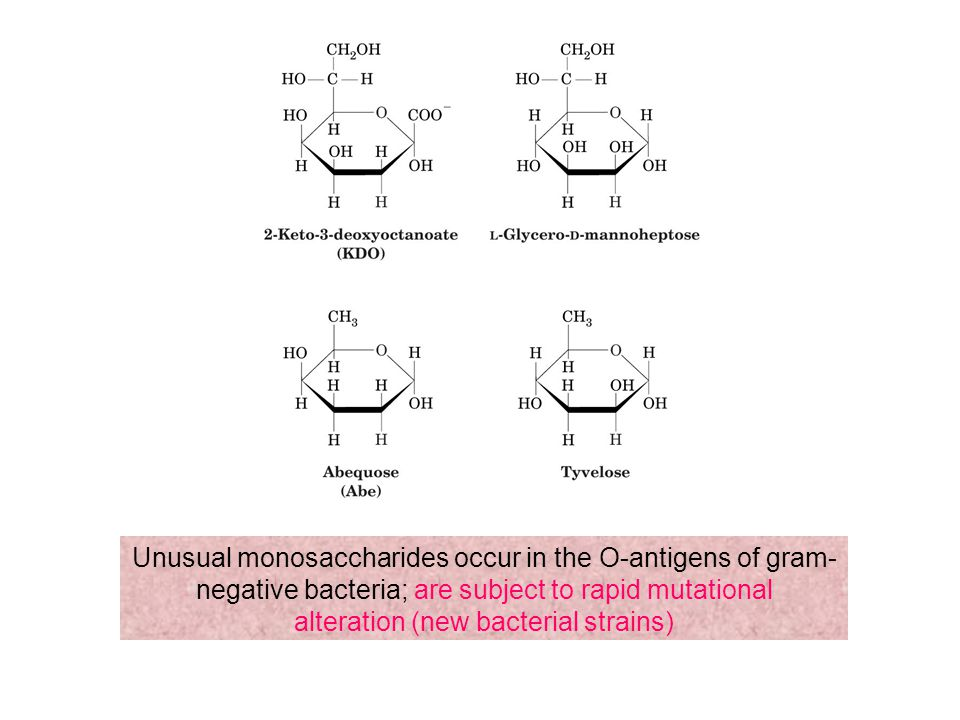 Unusual monosaccharides occur in the O-antigens of gram-negative bacteria; are subject to rapid mutational alteration (new bacterial strains)