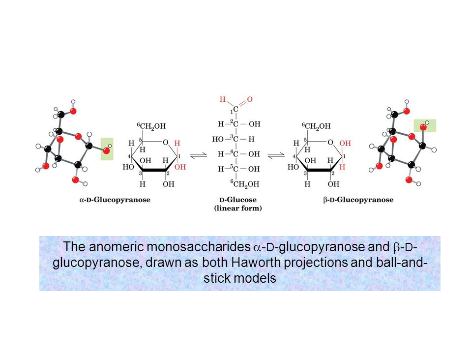 The anomeric monosaccharides a-D-glucopyranose and b-D-glucopyranose, drawn as both Haworth projections and ball-and-stick models