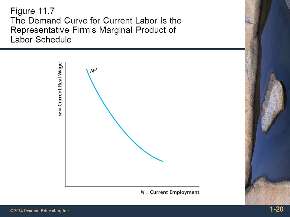 Figure 11.7 The Demand Curve for Current Labor Is the Representative Firm's Marginal Product of Labor Schedule