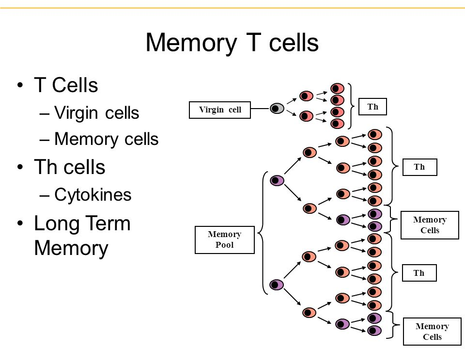 Memory T cells T Cells Th cells Long Term Memory Virgin cells