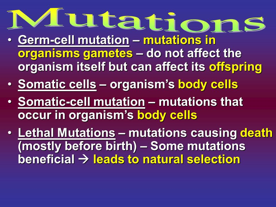 Mutations Germ-cell mutation – mutations in organisms gametes – do not affect the organism itself but can affect its offspring.