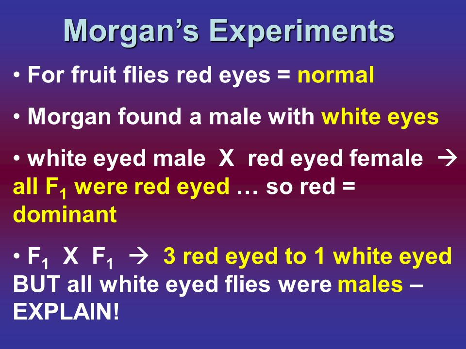 Morgan's Experiments For fruit flies red eyes = normal
