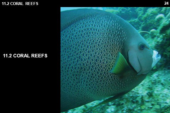 11.2 CORAL REEFS 11.2 CORAL REEFS 11.2.1 Corals
