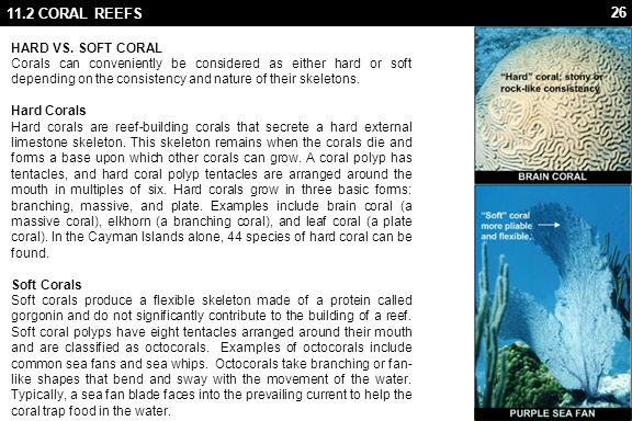 11.2 CORAL REEFS ANATOMY Coral Polyp