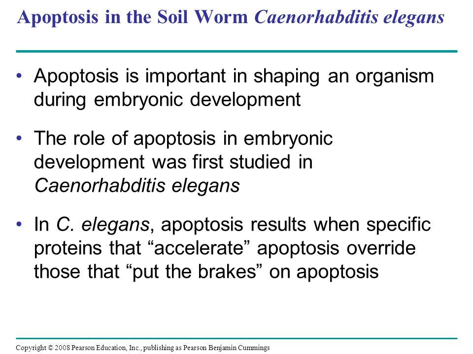 Apoptosis in the Soil Worm Caenorhabditis elegans
