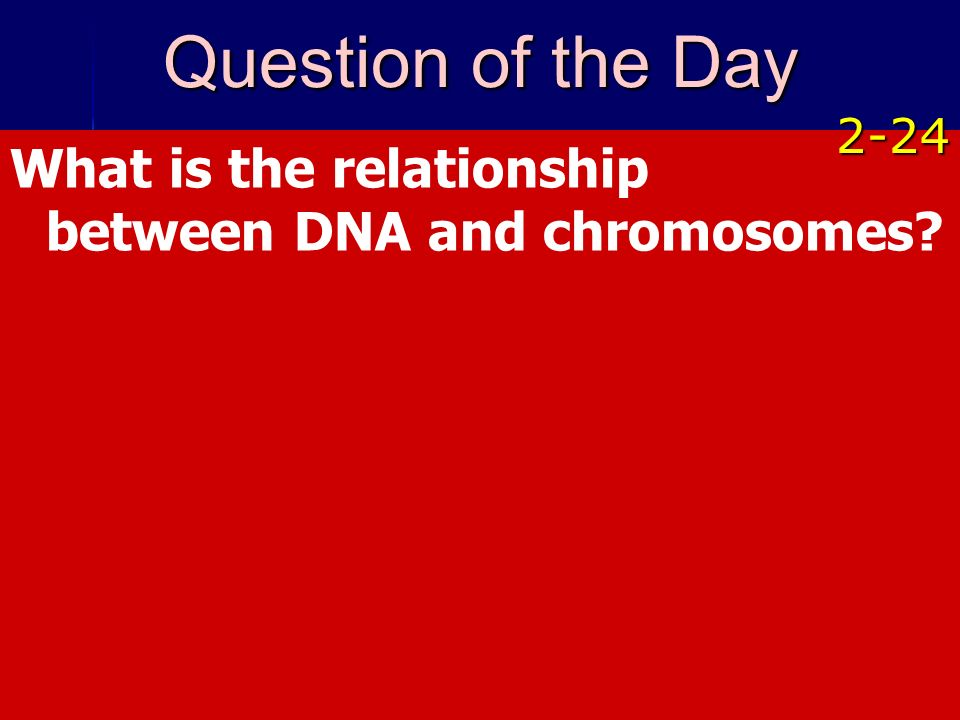 Question of the Day 2-24 What is the relationship between DNA and chromosomes