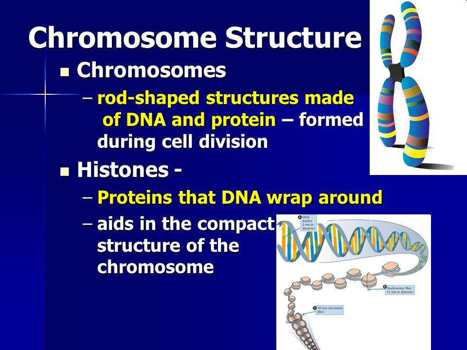 Chromosome Structure Chromosomes Histones -