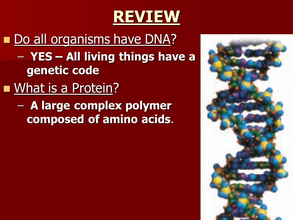 REVIEW Do all organisms have DNA What is a Protein