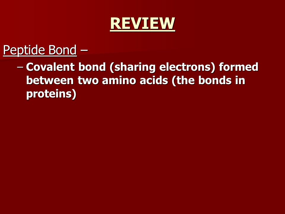 REVIEW Peptide Bond – Covalent bond (sharing electrons) formed between two amino acids (the bonds in proteins)