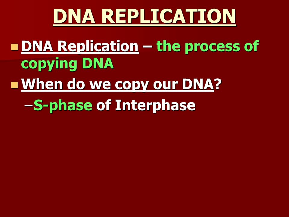 DNA REPLICATION DNA Replication – the process of copying DNA