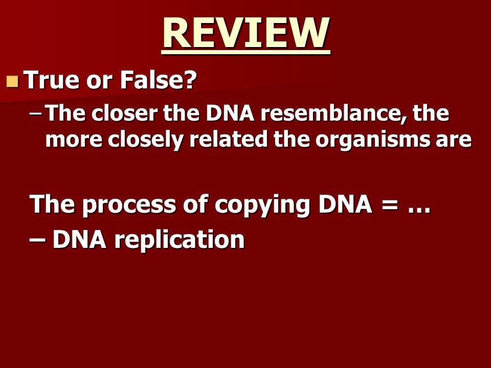 REVIEW True or False The process of copying DNA = … – DNA replication