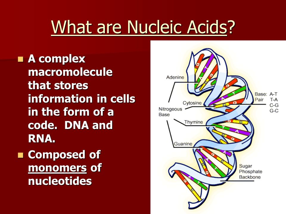 What are Nucleic Acids A complex macromolecule that stores information in cells in the form of a code. DNA and RNA.