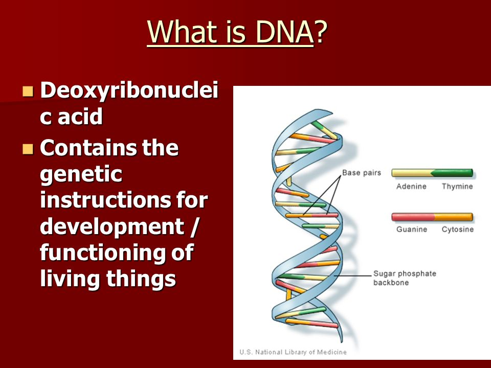 What is DNA Deoxyribonucleic acid