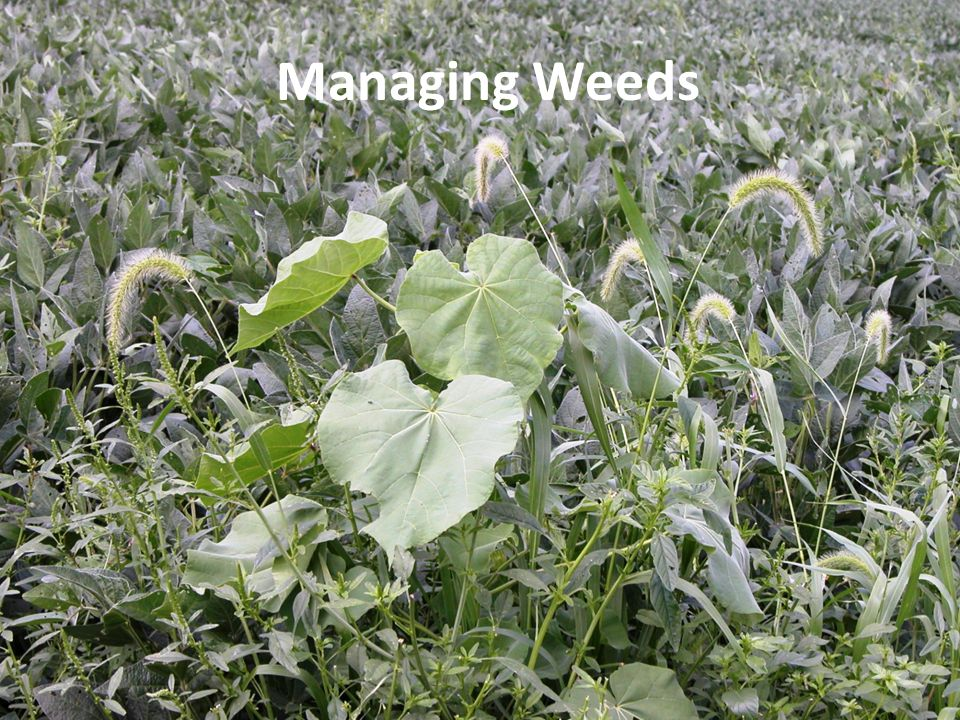 Managing Weeds This presentation is about the management of weeds.