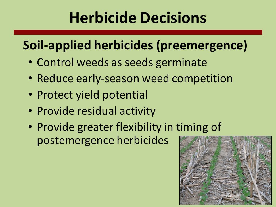 Herbicide Decisions Soil-applied herbicides (preemergence)