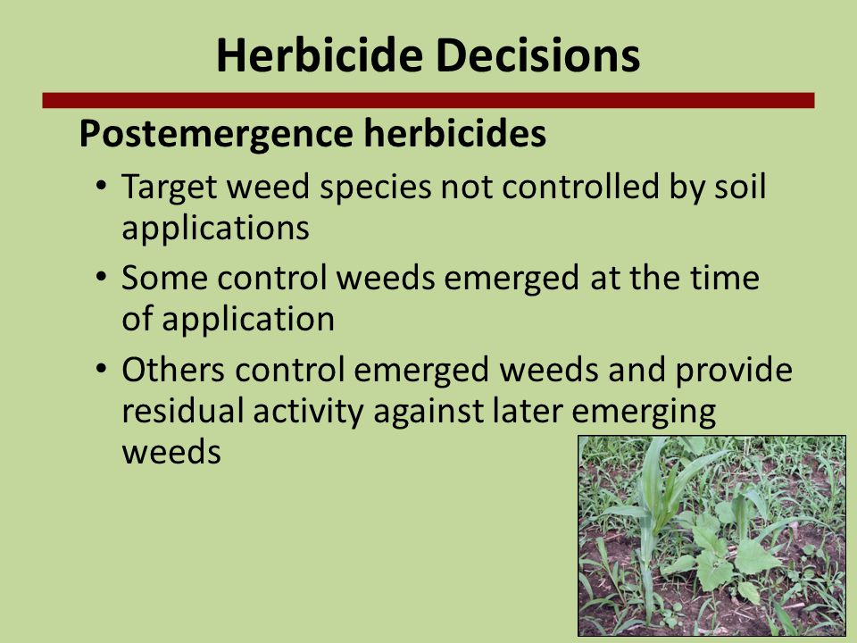 Herbicide Decisions Postemergence herbicides